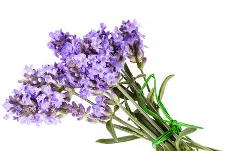 lavandula angustifolia: Violet  lavendula flowers isolated on white background, close up. Stock Photo