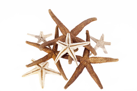 Sea stars isolated on white background . Stock Photo