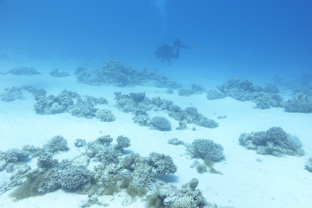 Bottom of tropical sea with coral reef and diver, underwater