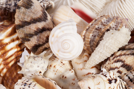 Background of various types of sea shells , close up
