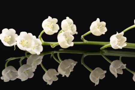 Single twig of spring flowers of Convallaria majalis isolated on black background, mirror reflection Stock Photo