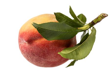 Single fresh fruit of peach isolated on white background