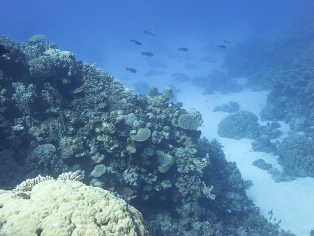 Colorful coral reef at the bottom of tropical sea, hard corals, underwater landscape Foto de archivo