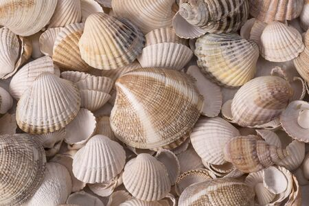 Background of collection of various sea shells , close up