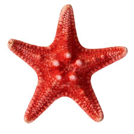 Stella di mare rossa essiccata isolata su sfondo bianco, primo piano