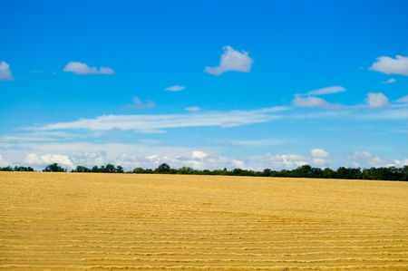 yellow field under blue sky with clouds photo