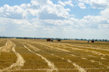 view on the rows of the mowed straw with machines on background photo