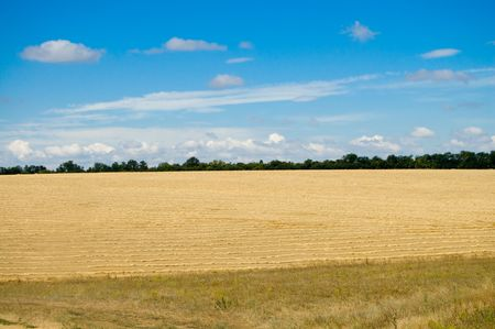 lea: view on the field with new big harvest