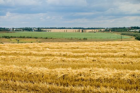 lea: rural view on the field with new big harvest