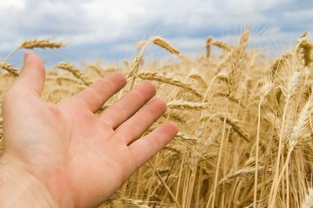 a hand shows on a new harvest photo