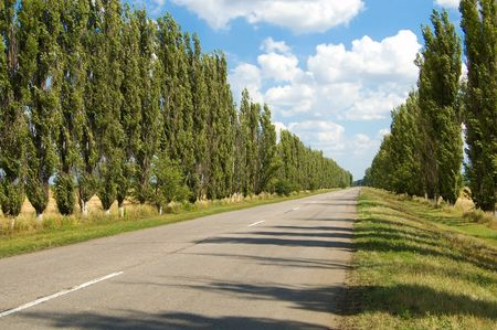 way out: rural road with trees near it board