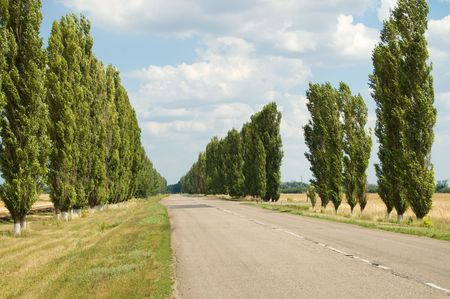 rural covered road with trees along way photo