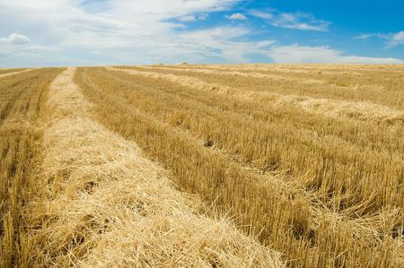 to gather in the harvest, south Ukraine photo