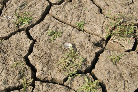 dried-up earth after a flood photo