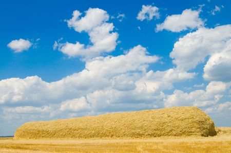 long stack of straw on the field photo
