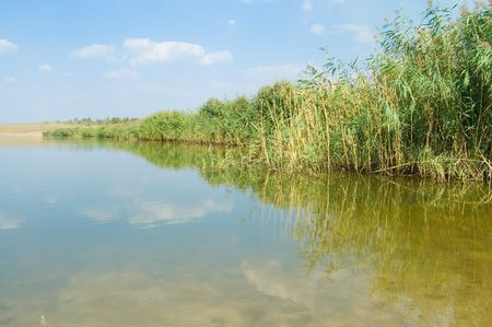 ashore wonderful river with a reed photo