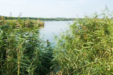 view on a lake through the jungles of reed photo