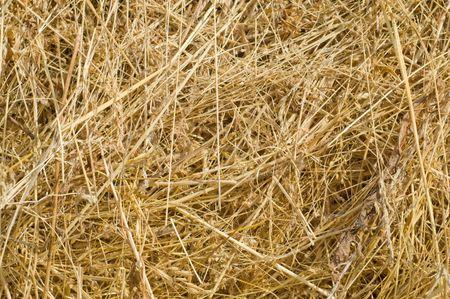 image of hay closeup photo
