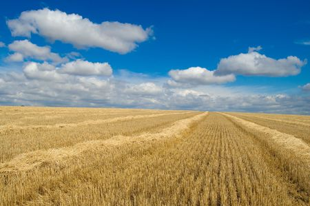 fare: heaps of straw on the field under beautiful sky