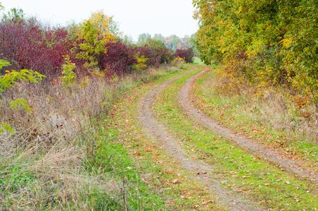 colors of autumn along a rural road photo