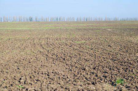 black soil fild after harvesting photo