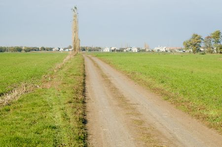 rural way to village along green field photo
