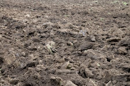 arable soil after harvesting photo