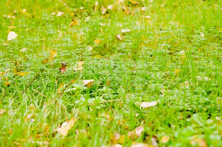 green cover of grass autumn photo
