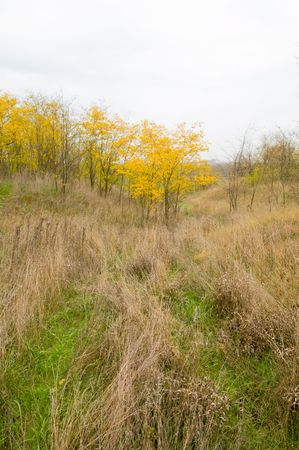 small gully at autumn with trees Stock Photo - 3815614