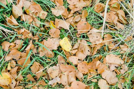 yellow leavs and green grass photo