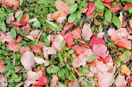 red leavs and green grass photo