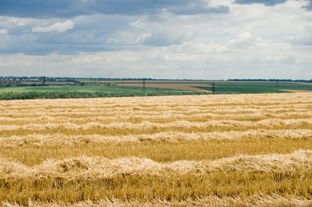 fare: view to rural scene