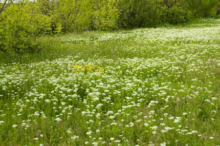 green meadow at summer Stock Photo - 3948688