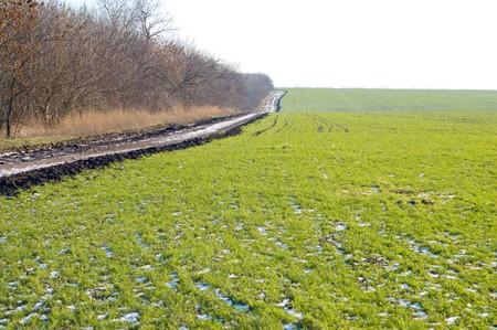 rural road at winter photo