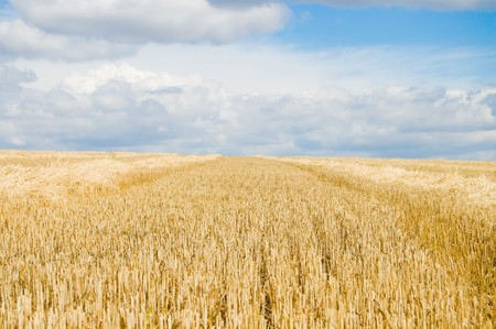 fare: the field is in summer after harvesting Stock Photo