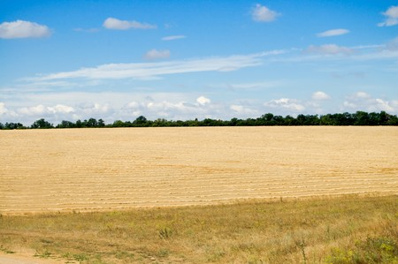 steppe field of yellow color photo