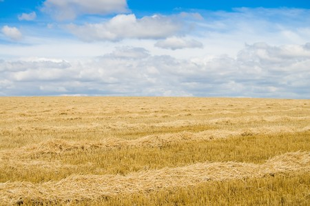 summer view to steppe field photo
