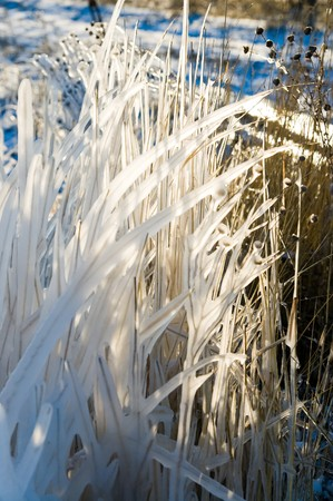frozen grass with sunny light photo