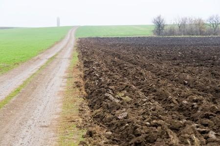 rural road near the field in fog at autumn photo