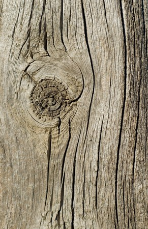 textured surface of board with a knot photo