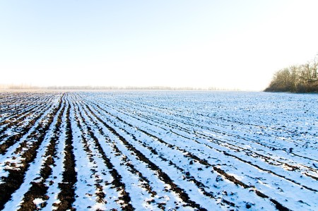 winter field covering snow