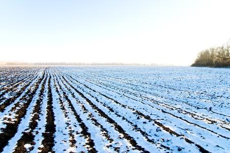 plowed field: winter field covering snow