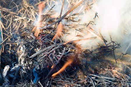 burning bush: fire and smoke on a dry heap