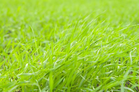natural green grass on field photo