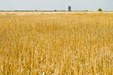 fare: the field is in summer after harvest Stock Photo