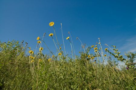 yellow flower on blue sky background Stock Photo - 5363880