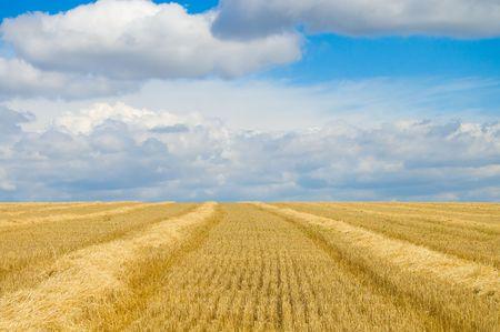 midday: Solar summer midday on fields of Ukraine
