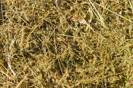 yellow dry hay as background photo