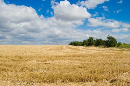 para recoger la cosecha, al sur de Ucrania Foto de archivo - 5363845
