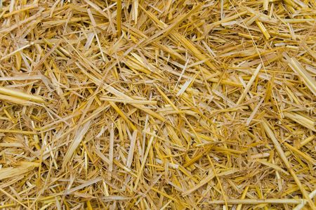 view to straw closeup as background Stock Photo - 5363866